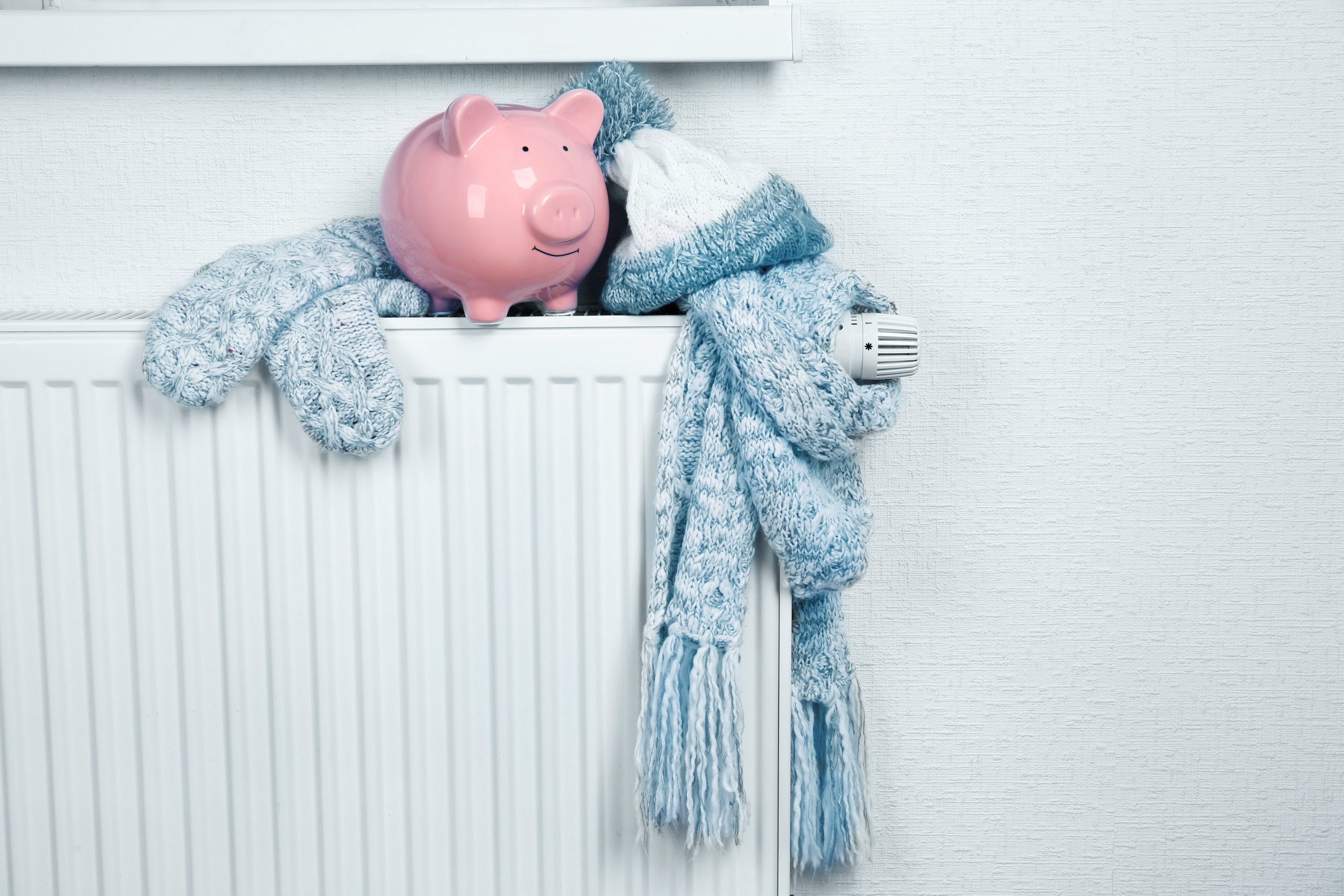 Pig sitting next to a scarf on a radiator